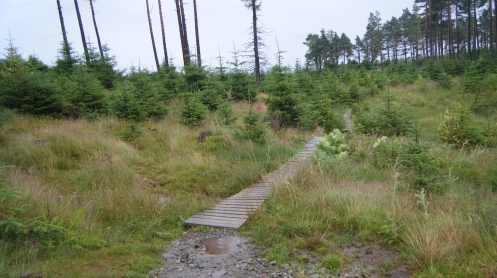 Easy boardwalk bit on TNF trail in Grizedale Forest.