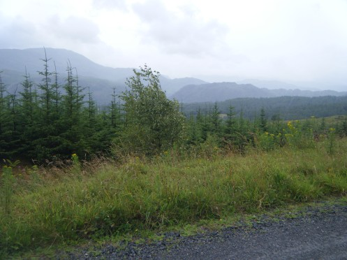 TNF Trail (fireroad section) - Grizedale Forest