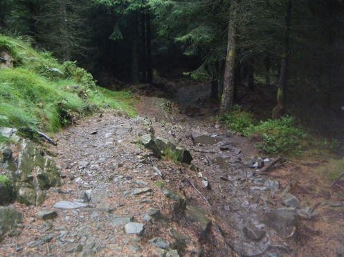 TNF Trail in Grizedale Forest.